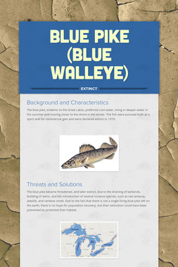 Blue Pike (Blue Walleye)