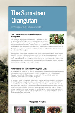The Sumatran Orangutan
