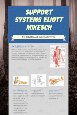 Support Systems eliott mikesch