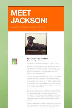 MEET JACKSON!