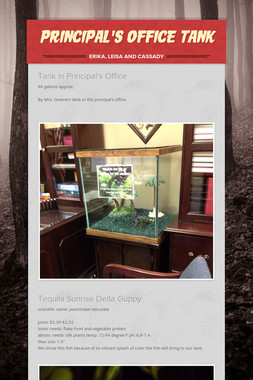 Principal's Office Tank
