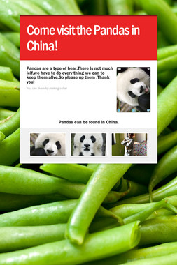 Come visit the Pandas in China!