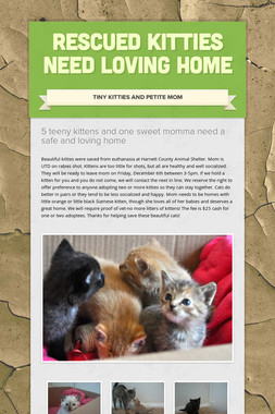 Rescued Kitties Need Loving Home