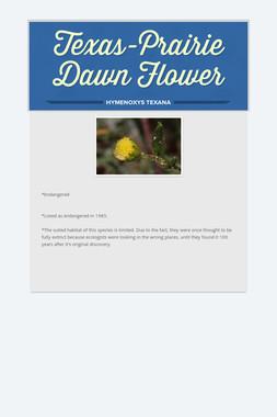Texas-Prairie Dawn Flower