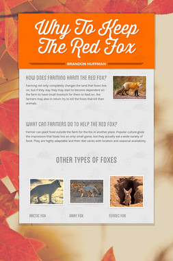 Why To Keep The Red Fox