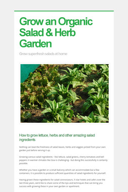 Grow an Organic Salad & Herb Garden