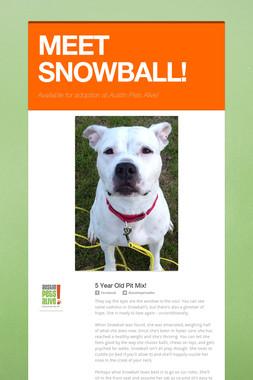 MEET SNOWBALL!