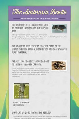 The Ambrosia Beetle