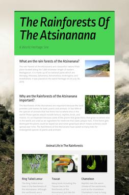 The Rainforests Of The Atsinanana