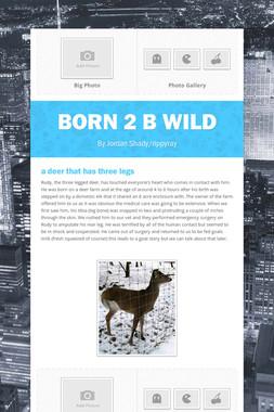 Born 2 B Wild