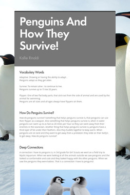 Penguins And How They Survive!