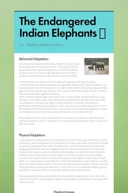 The Endangered Indian Elephants 🐘