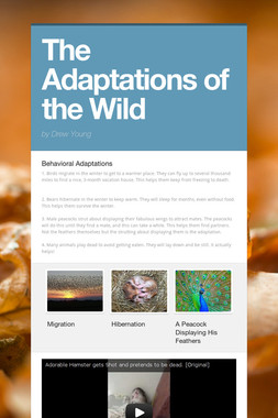 The Adaptations of the Wild
