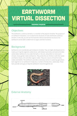 Earthworm Virtual Dissection