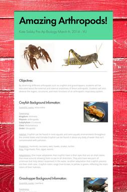 Amazing Arthropods!