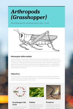 Arthropods (Grasshopper)