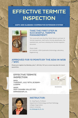 Effective Termite Inspection