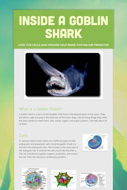 Inside A Goblin Shark