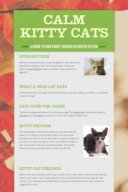 Calm Kitty Cats
