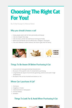 Choosing The Right Cat For You!