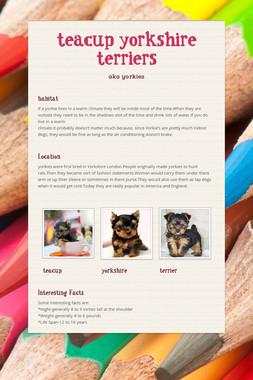 teacup yorkshire terriers