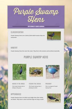 Purple Swamp Hens