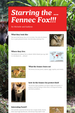 Starring the ... Fennec Fox!!!