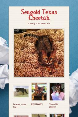 Seagold Texas Cheetah