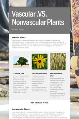 Vascular .VS. Nonvascular Plants