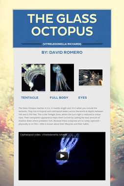 The Glass Octopus