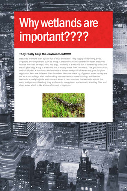 Why wetlands are important????