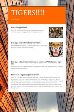 TIGERS!!!!!
