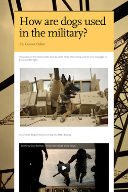 How are dogs used in the military?