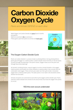 Carbon Dioxide Oxygen Cycle