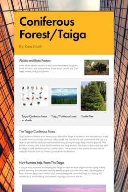 Coniferous Forest/Taiga