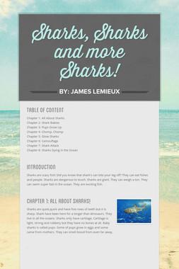 Sharks, Sharks and more Sharks!