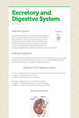 Excretory and Digestive System