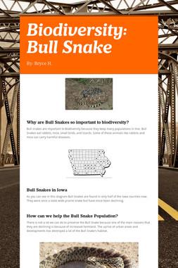 Biodiversity: Bull Snake