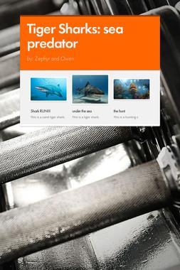 Tiger Sharks: sea predator
