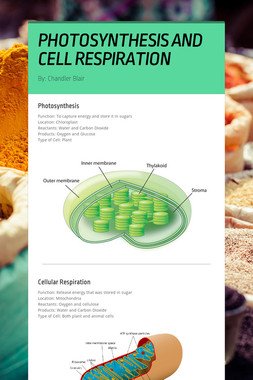 PHOTOSYNTHESIS AND CELL RESPIRATION