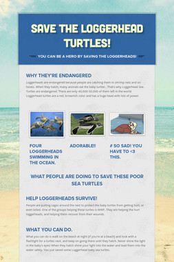 Save the Loggerhead Turtles!