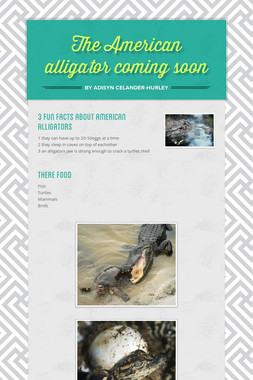 The American alligator coming soon