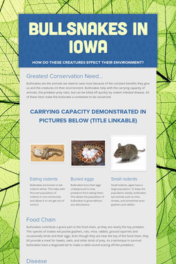 Bullsnakes in Iowa