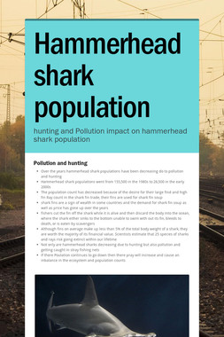 Hammerhead shark population