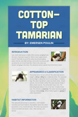 Cotton-Top Tamarian