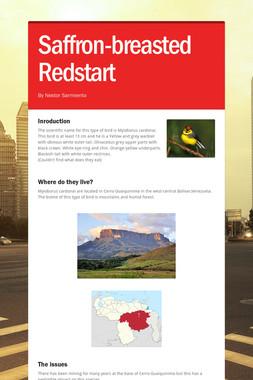 Saffron-breasted Redstart