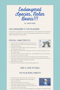 Endangered Species, Polar Bears!!!
