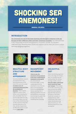 Shocking Sea Anemones!