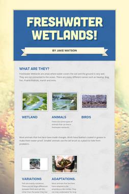 Freshwater Wetlands!