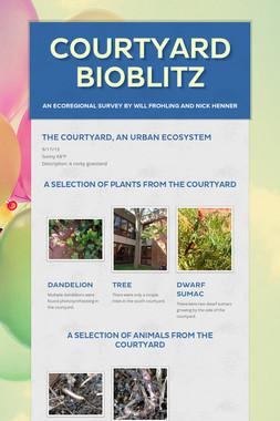 Courtyard Bioblitz